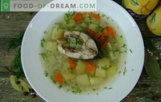 Sopa de pescado de carpa: un primer plato fragante y saludable. Recetas de sopa de carpa: clásica, con yema, mijo, cebada perlada, etc.
