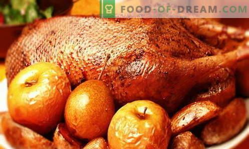 Ganso con manzanas - las mejores recetas. Cómo cocinar correctamente y sabroso un ganso con manzanas.