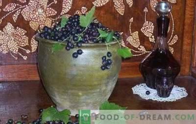 ¿Cómo hacer vino de grosella negra? Cinco recetas para los vinos caseros simples de grosella negra: joven, postre, licor