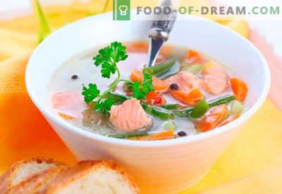 Sopas de trucha - recetas probadas. Cómo cocinar adecuadamente y cocinar la sopa de truchas.
