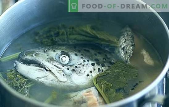 Sopa de cabezas de pescado - recetas y sutilezas para cocinar. Sopas de cabezas de pescado con arroz, mijo, verduras