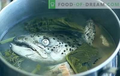 Zuppa di teste di pesce - ricette e sottigliezze di cucina. Zuppe di teste di pesce con riso, miglio, verdure