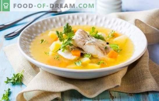 Oreja De Sterlet: Incomparable Sabor Y Aroma De Sopa De Pescado. Cómo  Cocinar Una Sabrosa Sopa De Pescado De Sterlet