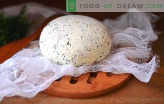 Queso kéfir en casa: sabroso, económico, saludable. Cómo hacer diferentes tipos de queso kéfir en casa