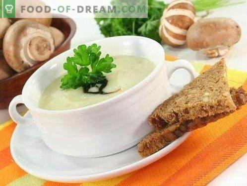 Sopa de champiñones - las mejores recetas. Cómo cocinar correctamente y sabrosa la sopa de champiñones.