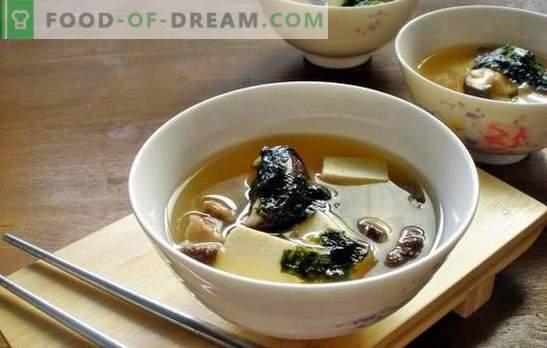 Sopa de hongos ostra: un plato aromático para el almuerzo en cualquier época del año. Las mejores recetas de sopa de champiñones de setas con pollo, queso, etc.