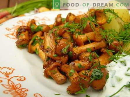 Setas fritas - las mejores recetas. Cómo cocinar adecuadamente y cocinar los champiñones fritos.