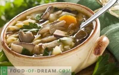 Sopa de champiñones con champiñones porcini: ¡el más favorito! Recetas de sopa de champiñones con porcini: con crema, pasta, cebada, tocino