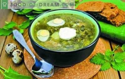 Sopa de acedera - rápida, fresca, sabrosa. Recetas sencillas de sopa de acedera sin carne, en caldo de huesos, con pechuga, en crema