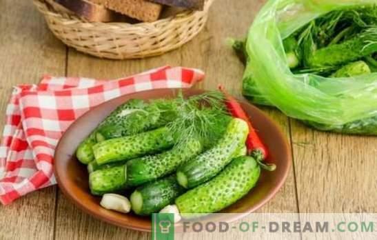 Pepinos encurtidos: recetas rápidas con y sin pepinillos. En una jarra, bolsa, olla - pepinos recién salados para recetas rápidas