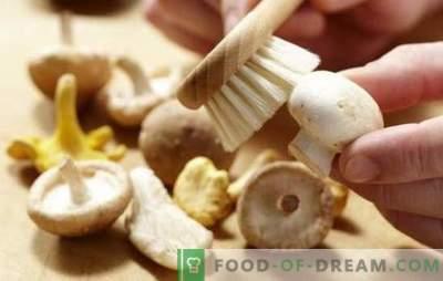 Cómo limpiar los champiñones: para hervir, freír, marinar. ¿Se limpian los champiñones antes de cocinar y por qué?