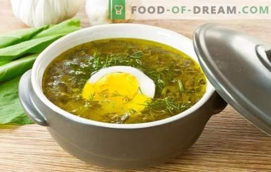 Sopa de avellanas con huevo: recetas paso a paso desde abundantes hasta dietéticas. Cocinando sopas de acedera con huevo, arroz, queso y avena