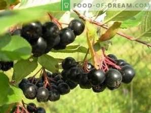 Cómo secar chokeberry negro